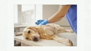 Using Tramadol 50Mg Dosage For Pet's Pain Management