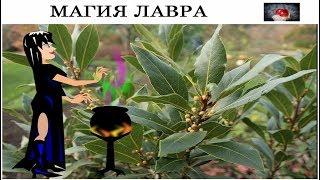МАГИЯ и ПРАВДА ЛАВРОВОГО ЛИСТА