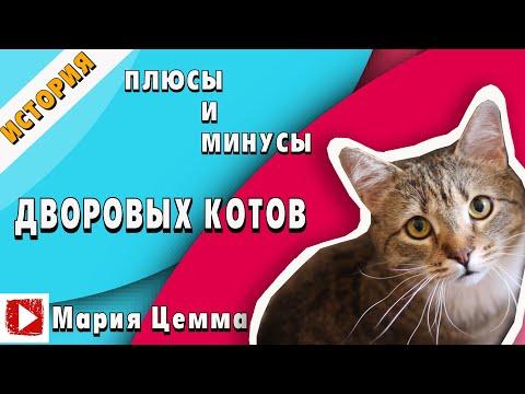 Вопрос: В чем отличие кошек породы Дракон Ли от беспородных?