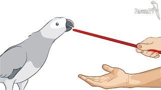 Baixar Jak wytrenować papugę według Barbary Heidenreich