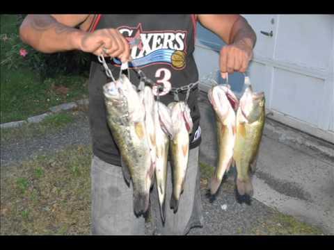 Fish Bucks County