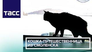 Кошка-путешественница из Смоленска