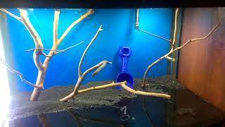 как легко сделать корягу для аквариума своими руками