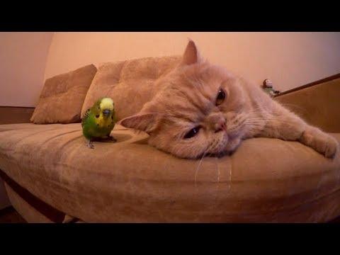 Самый добрый кот Марсик и попугай Кеша. Забавные животные.