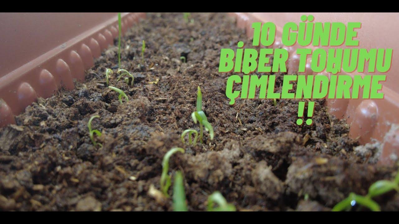 Biber Tohumu Nasıl Çimlendirilir? Biber Tohumu Nasıl Ekilir? / #Vlog 1