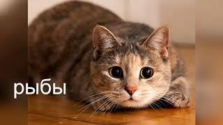 Какая ты кошка по гороскопу!