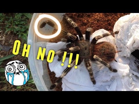 Tarantula Unboxing ~ SHE BROKE HER LEG ?!!  :(