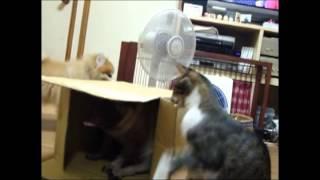 我が家のパグと猫は異常なダンボール箱好き! ネットでの買物が主流の我...