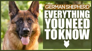 GERMAN SHEPHERD! DOG BREED 101 Everything You Need To Know