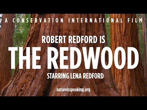 Nature Is Speaking – Robert Redford is The Redwood   Conservation International (CI)