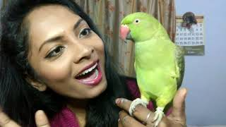 amaizing talking parrot