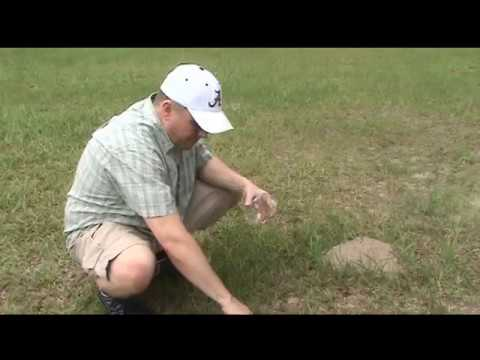 How do you get rid of ants nests in grass