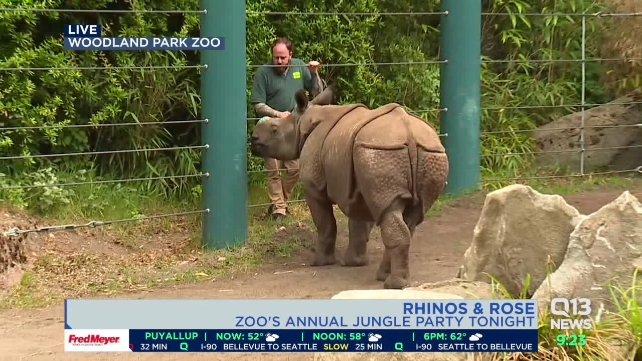 Rhinos and Rose at the Woodland Park Zoo - YouTube
