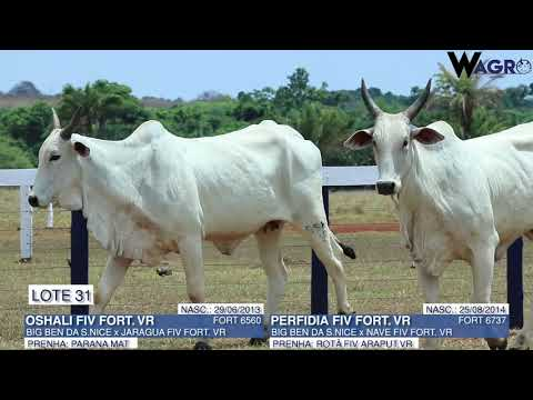 LOTE 31   FORT 6560,6737