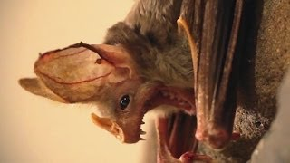 Are You Afraid Of Bats?