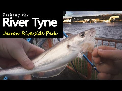 Fishing The River Tyne - Jarrow Riverside Park
