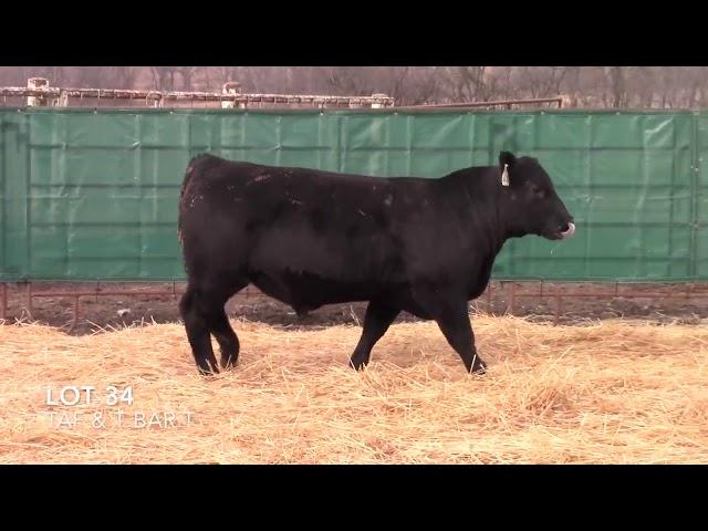 Taliaferro Angus \u0026 T Bar T Angus Ranch - 34
