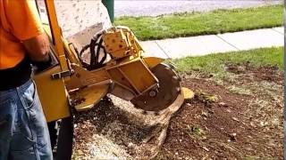 Stump Grinding- Superior Tree Service, Inc.