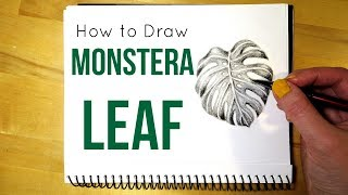 How to Draw a Monstera Leaf    Leaf Drawing in Pencil