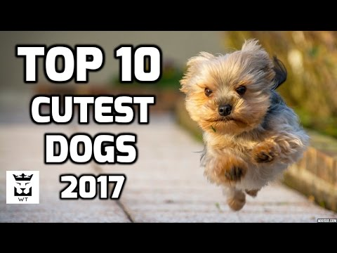 Top 10 Cutest Dogs in the World 2017 - Best Dogs Breeds Ever