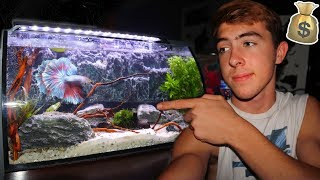 my-new-dream-betta-fish-tank-crazy