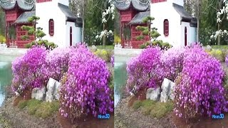 3D TV - Beautiful Greenhouses and Chinese Garden in April (SBS half)