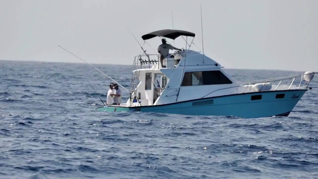 White marlin deep sea fishing cancun isla mujeres youtube for Deep sea fishing cancun