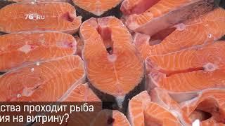 Секреты и тайны рыбного производства