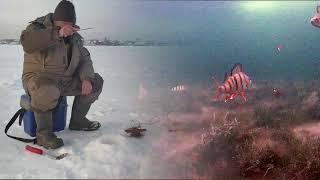 Когда не клюёт окунь не значит что его нет подводные съёмки