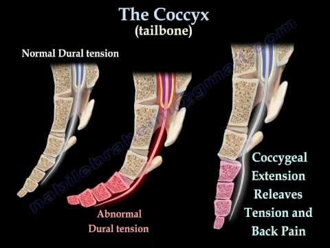 Coccyx, Tailbone pain /coccydynia - Everything You Need To Know - Dr. Nabil Ebraheim