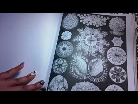 Art Forms In Nature Coloring Book Flip Through