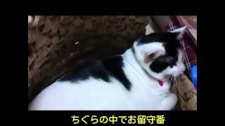 しーちゃんphoto集(^-^)♪白い旋律♪