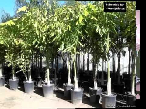 hqdefault Palm Like House Plants on palm like leaves, palm like weeds, palm like flower, palm like succulents, palm like fern,
