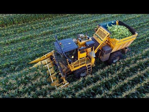 Sweet harvest | Oxbo 2475 corn picker | Organic sweet corn harvest 2017