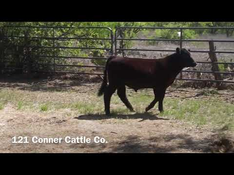 Conner Cattle Co 121