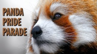 Red Panda Pride Parade - The Epic Song