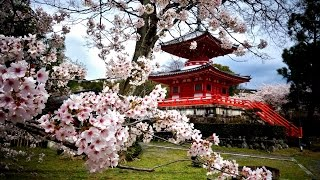 Meditation zen music | Traditional Japanese music | Relaxing music