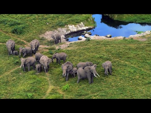 UN CITES conference agrees to limit sales of African elephants to zoos