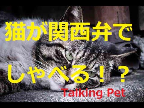 の 動画 猫 しゃべる