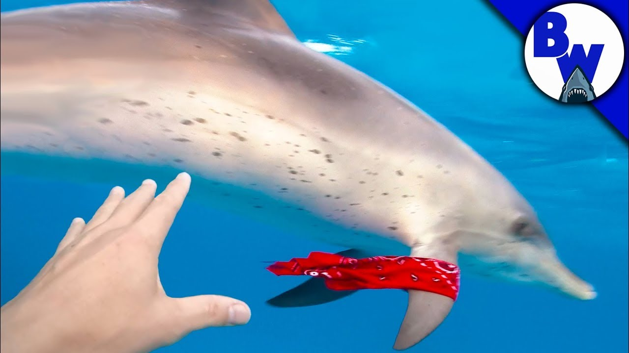 Dolphin STEALS From Diver!