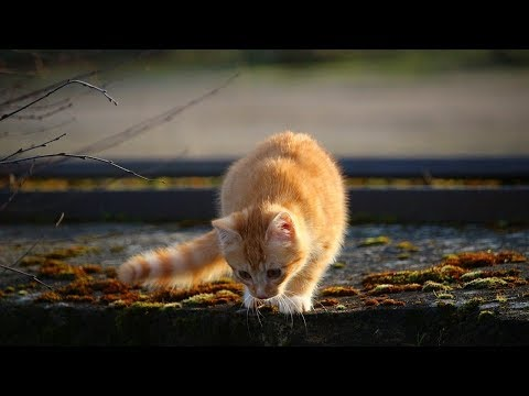 How To Keep A Cat From Running Away When It Is Moved - Moving Your Cat