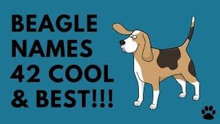 Beagle Names - 42 CUTE & BEST NAMES | Names
