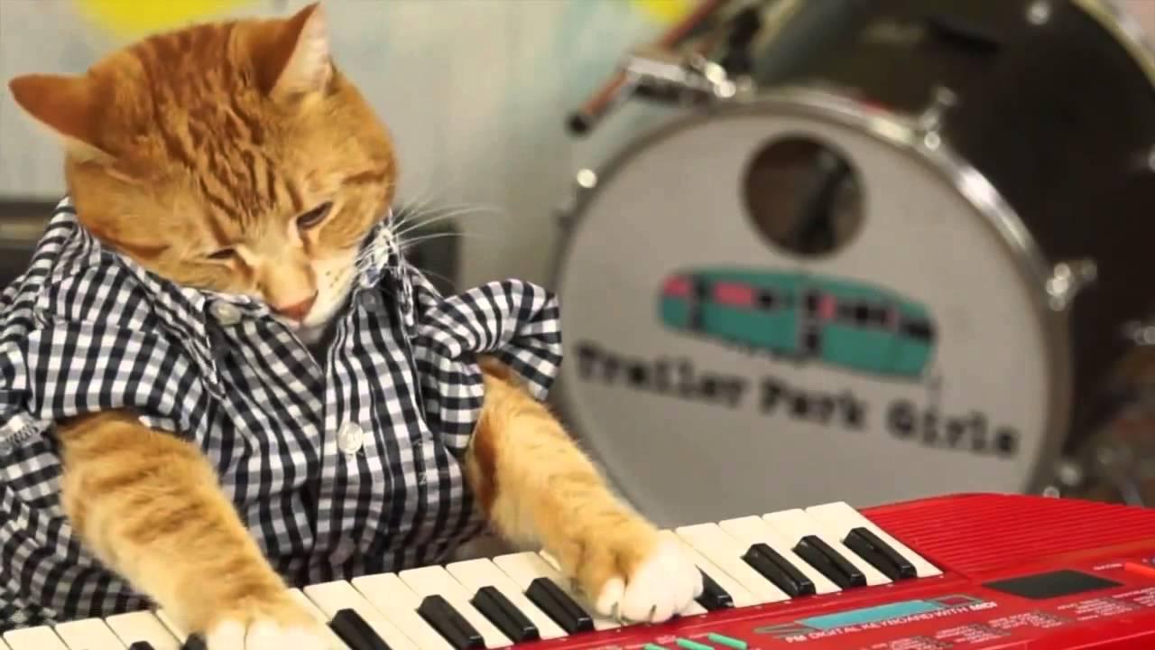 Youtube Keyboard Cat  Tears