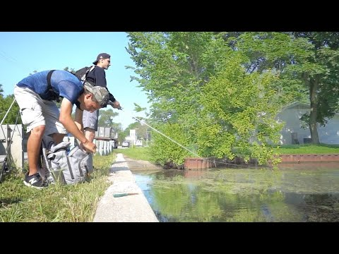 Bowfin Fishing In A TINY Creek!! (Roadside)