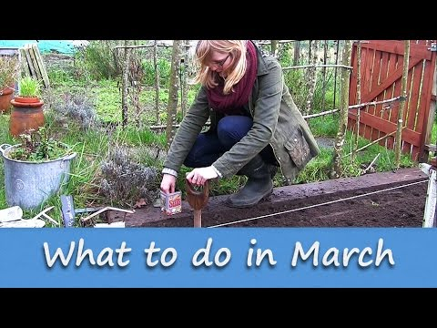 Jobs to do in the allotment garden march youtube for Gardening jobs for march