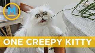 This creepy-looking cat has become insta-famous   Your Morning