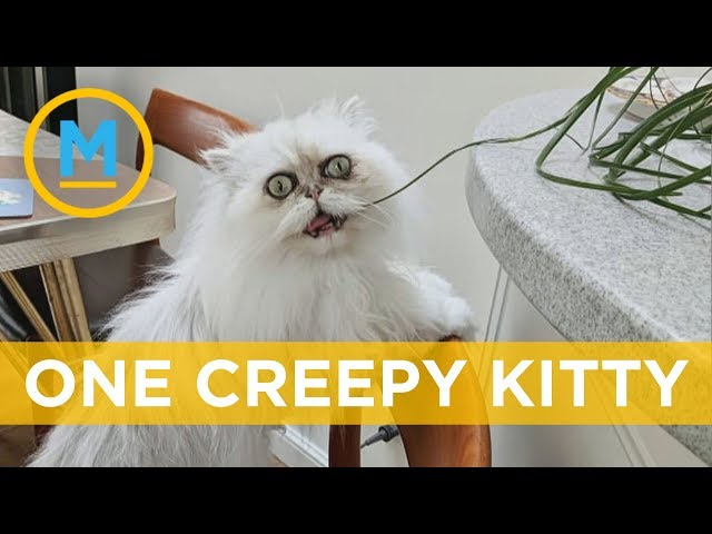 This creepy-looking cat has become insta-famous | Your Morning