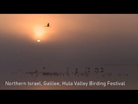 Hula Valley Birding Festival