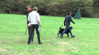 Rottweiler Schh 3 Trial (protection)- Victoria Rottweiler Club,bc,canada