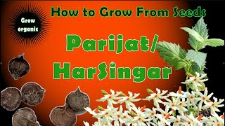 How To Grow Parijat From Seeds| Coral Jasmine | Harsinghar | Nyctanthes Arbor-tristis| Shiuli